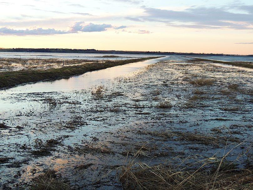 Lois Hole Wetland