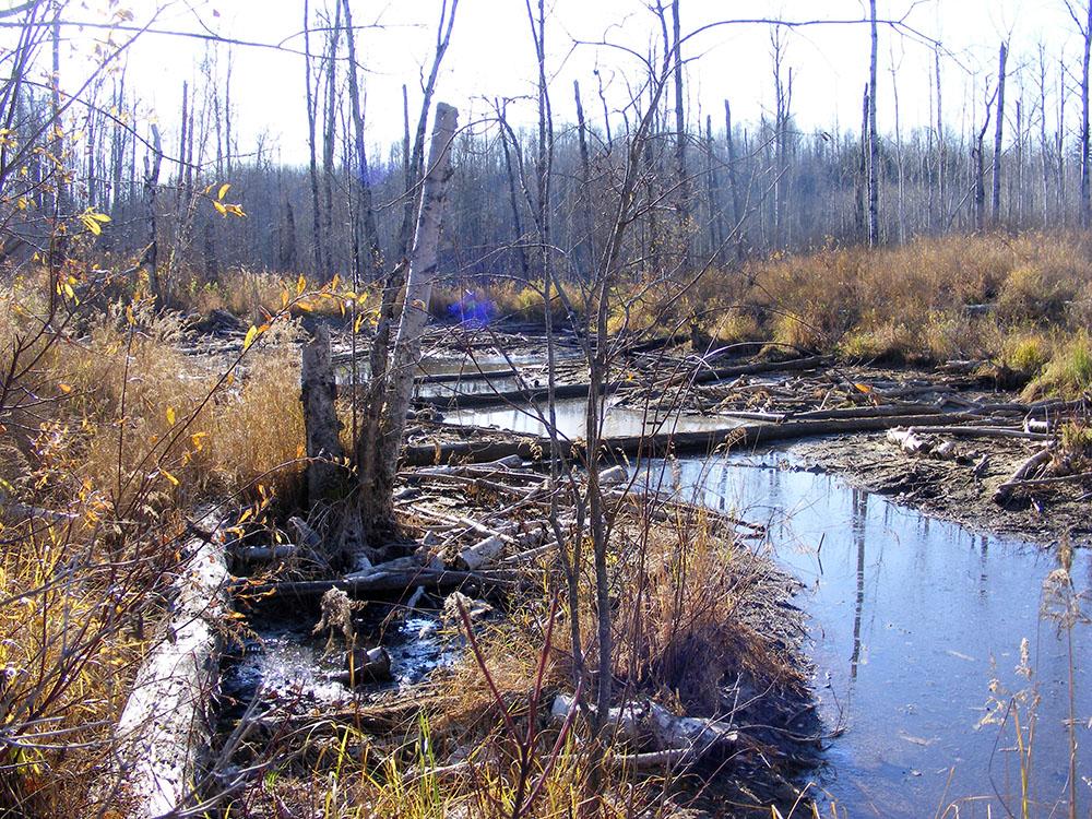 Muskeg River Wetland 1000